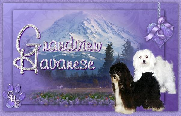 Grandview Havanese & Biewers
