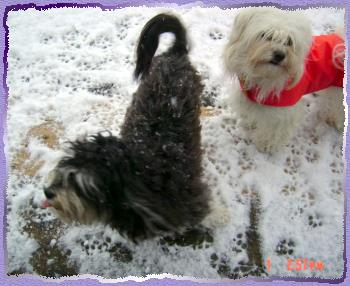 Katie and Cali playing and catching snow flakes
