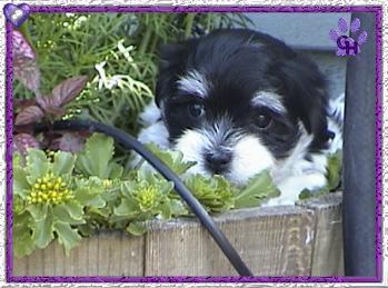 Roxy's pup