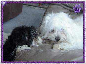 Elli and Skye