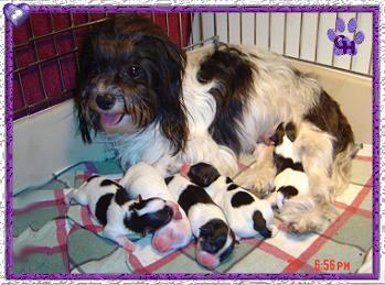 Roxys litter born on January 20th