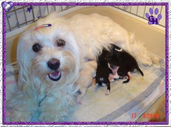 Vanilla Skys litter born on March 16th 2004